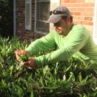 Professional Lawn and Landscape Maintenance