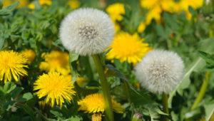 How To Control Garden Weeds