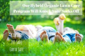 Organic Lawn Care Program