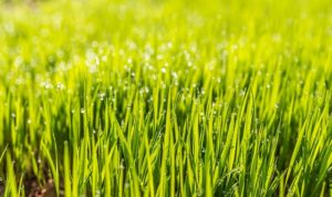 Why You Should Aerate and Overseed Your Lawn This Fall