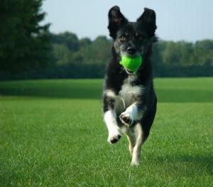 Creating A Dog-Friendly Landscape
