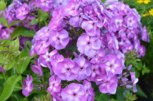 Fragrant Plants