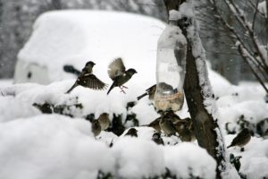 Attract Birds In Winter