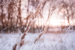snow effects garden plants