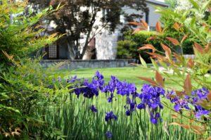 Landscape Maintenance Program